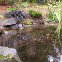 Water feature: rainy pond with sculpture